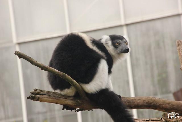 Ausflug Zoo Magdeburg 11.03.17 Teil 1.70