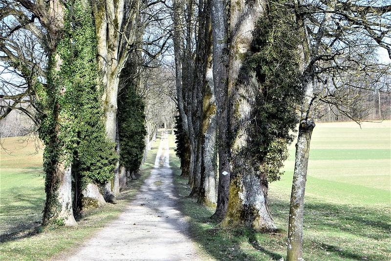 Feldbrunnen village 23.02 (48)