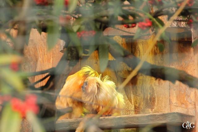 Ausflug Zoo Magdeburg 11.03.2017 Teil. 235