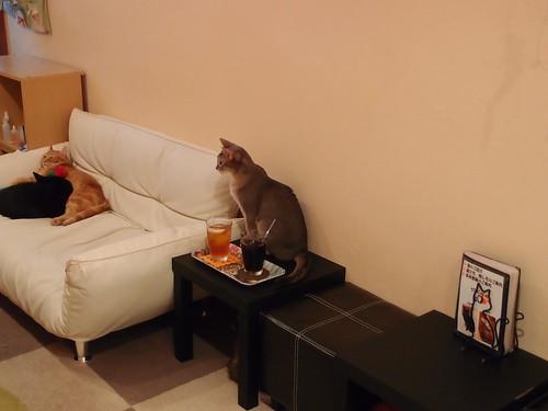 Cat Cafe Jalala