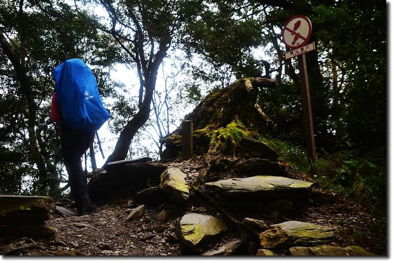 北大武山登山步道 3