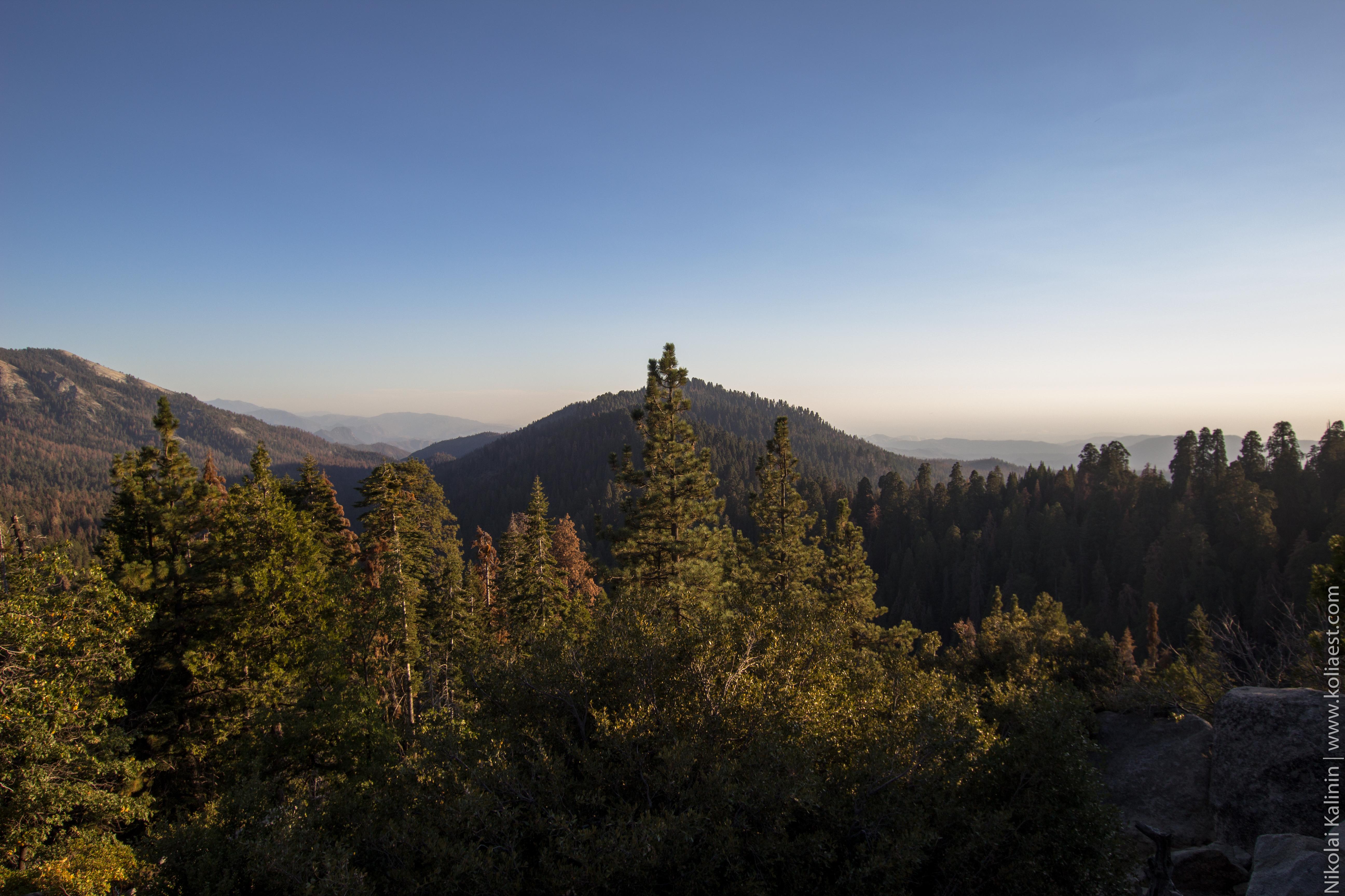 Sequoia-88