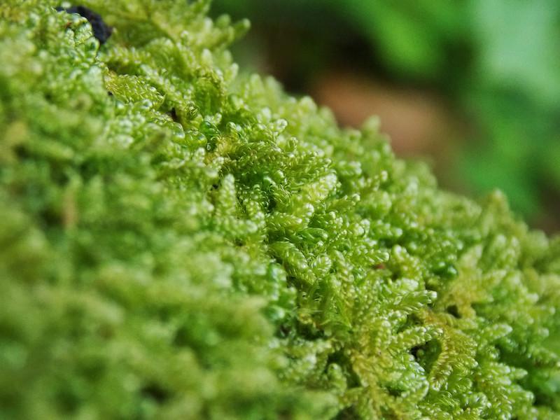 Musgo / Moss