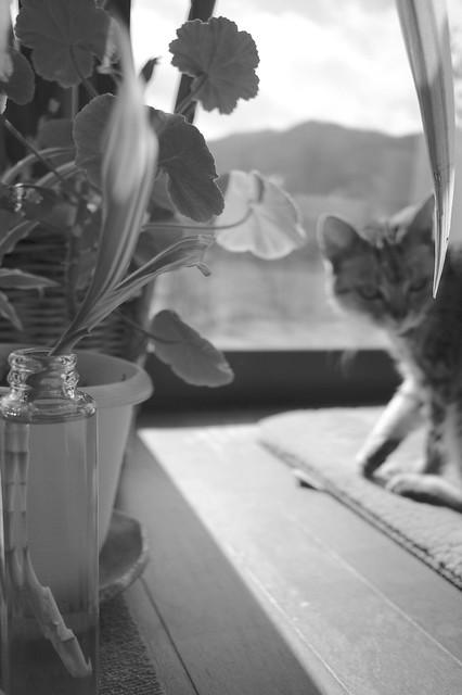 Good morning,Cat