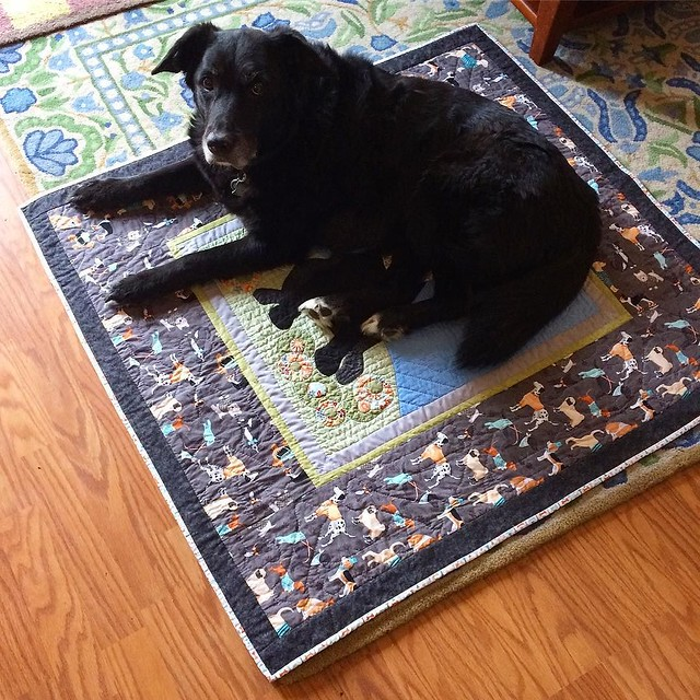 A black Lab on a black Lab quilt. 💙