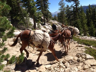 Pack horses descending from High Sierra Camp at May Lake | by cathy_baird