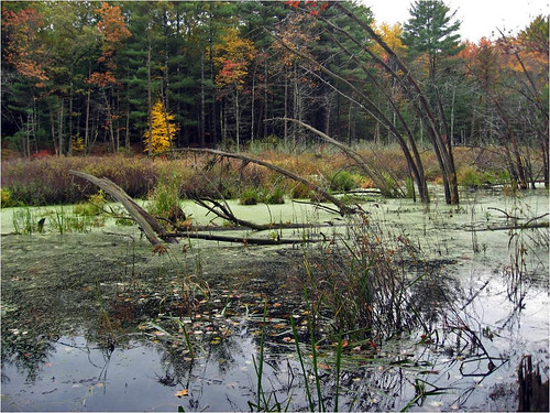 Wetlands oxbow national wildlife refuge ma credit for Us fish and wildlife service jobs