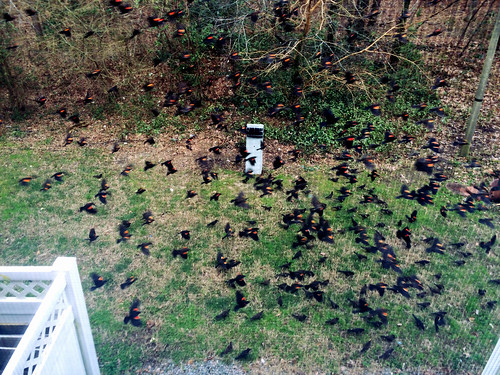 Birds in Our Backyard (Feb 25 2016)