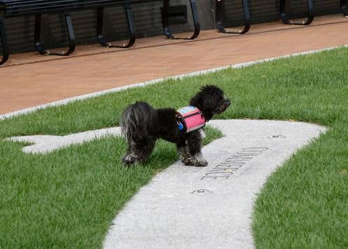 Heritage Dog Park Hours