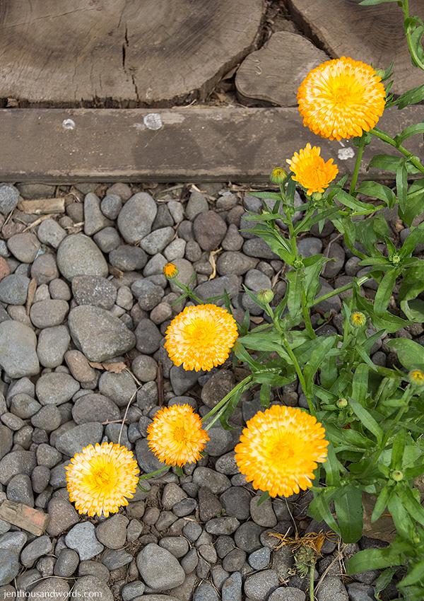 Flowers 22