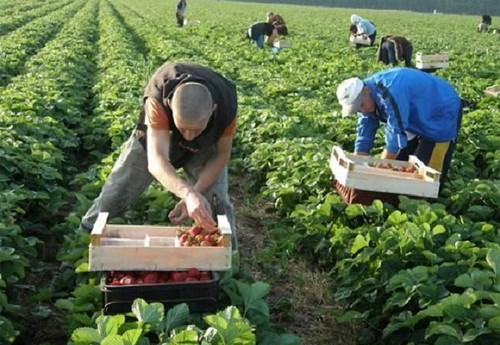 З Чехії депортують українських заробітчан