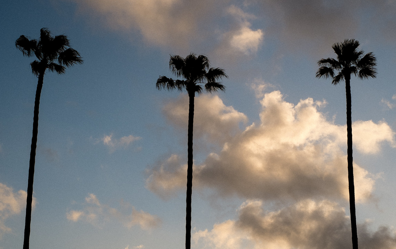 3 Palms | by michaelj1998