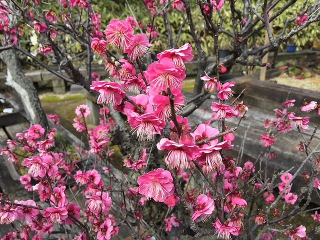Himeji Jardin Koko-en