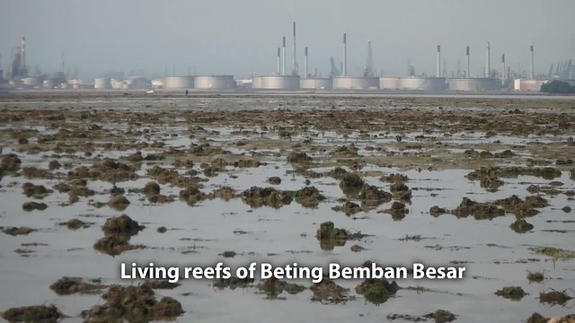 Living reefs of Beting Bemban Besar