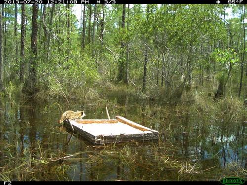 Wildlife Bait And Tackle Oak Island