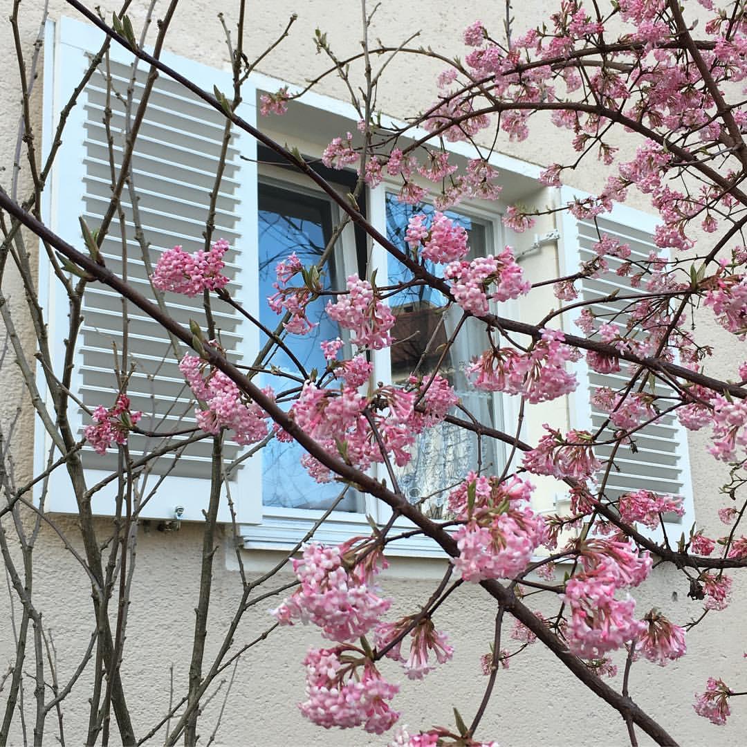 Spring time // Прекрасное по дороге на работу. Великая сила искусства - на самом деле это жилое здание абсолютно никакое, но на фото выглядит прямо романтично