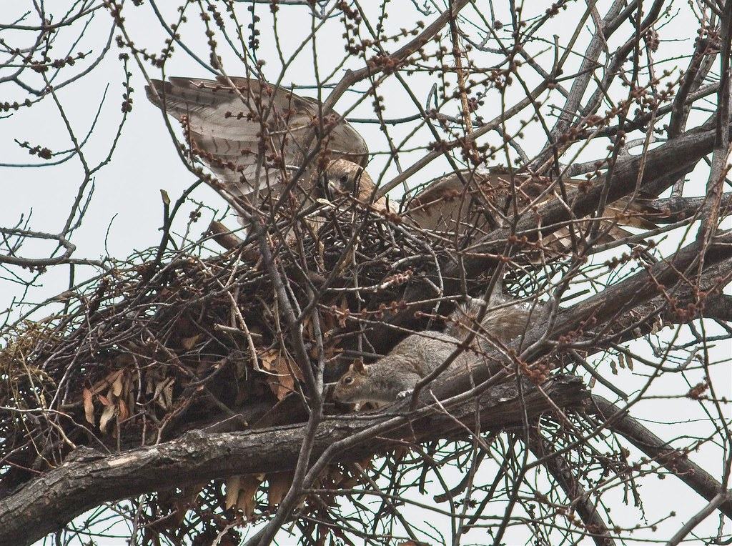 Christo rises up as squirrel retreats