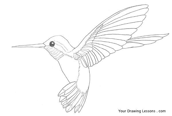 Hummingbird drawing by matt leyva hummingbird drawing by matt leyva