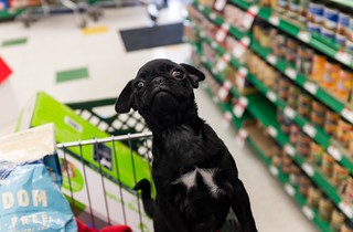 Violet's first trip to Pet Supplies Plus. | by rpavich