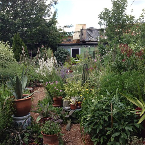 The Garden (view from back door). | by yougrowgirl