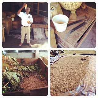 Learning how to harvest cocoa at Hotel Chocolate | by Downtown Traveler