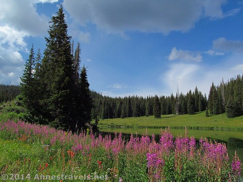 Wildflowers around Spring Lake in the Flat Tops Wilderness of Colorado