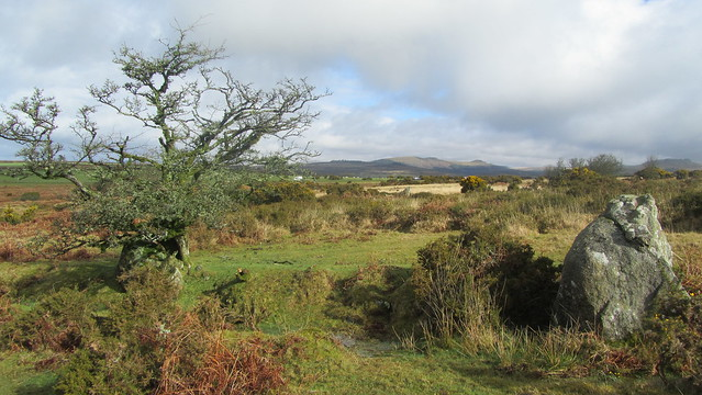 Looking to Leather Tor from Wigford Down
