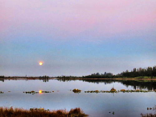 Moon over wetlands before sunrise 20170312