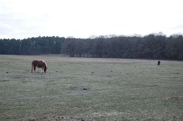 Bild: Eine Wiese im Abendlicht, zwei Pferde weiden darauf.