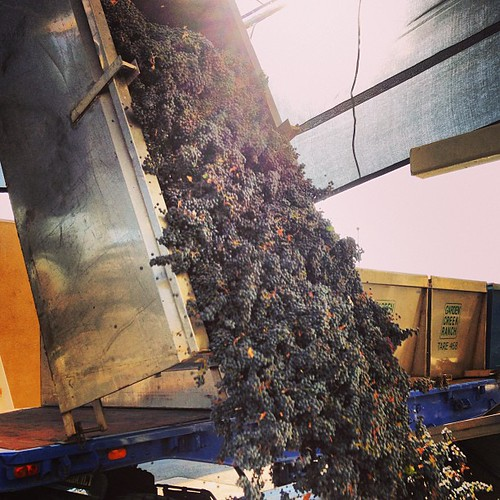 The last load of grapes for the Jordan 2013 harvest. | by jordanwinery.com