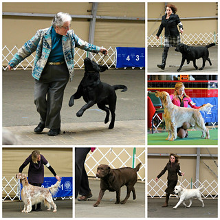 Minneapolis Kennel Club Dog Show