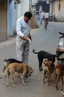 Man feeding some stray dogs | by Odaklar Odaklar