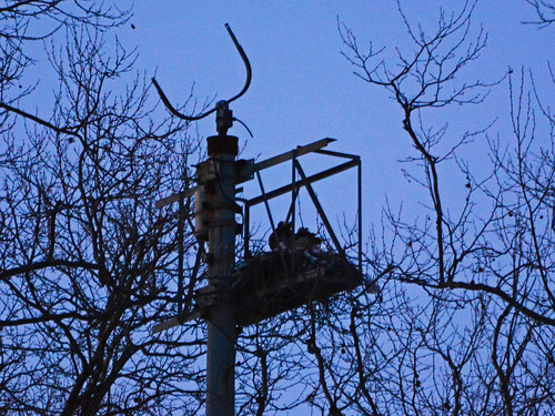GT Hawk Nest - 1457