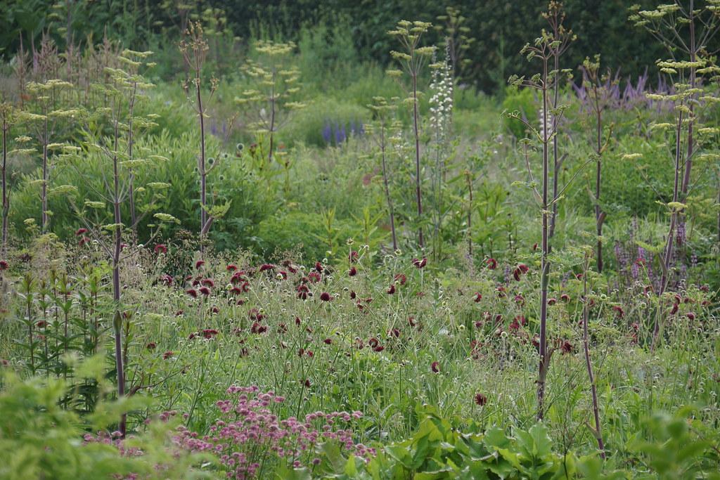 Piet Anja Oudolf 39 S Private Garden Flickr