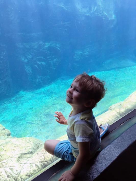 060516_aquarium11