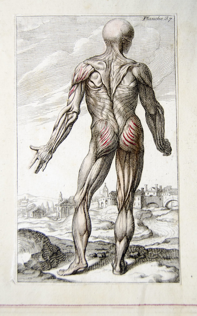 Muscles From French Anatomical Engraving Engraved Plate Sh Flickr