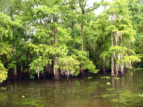how to get rid of spanish moss