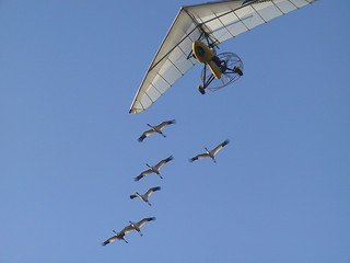 Whooping cranes follow an ultralight | by cmnsumd