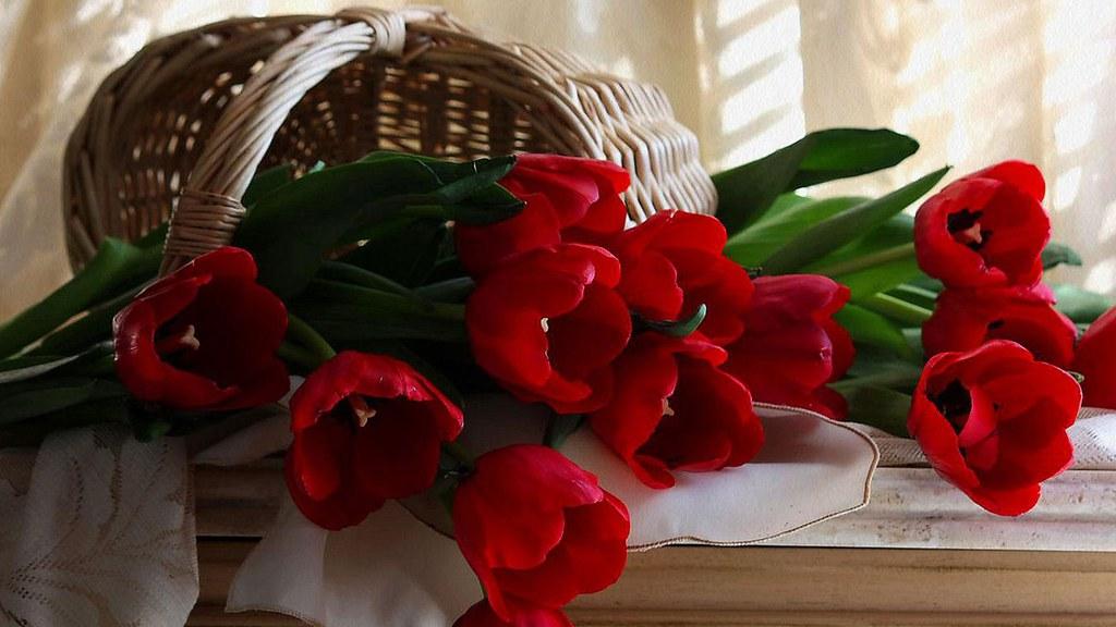 axl rose good evening roses 601217 fazidah mansor flickr