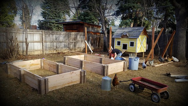 Project Backyard 2017