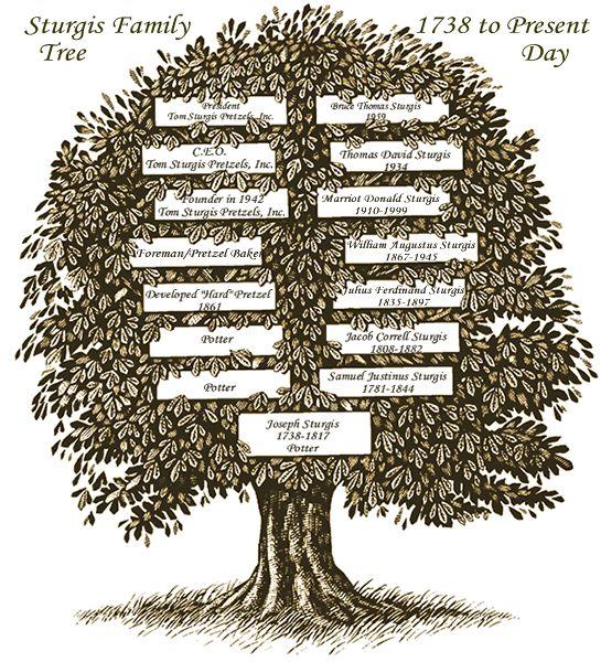 Sturgis_family_tree