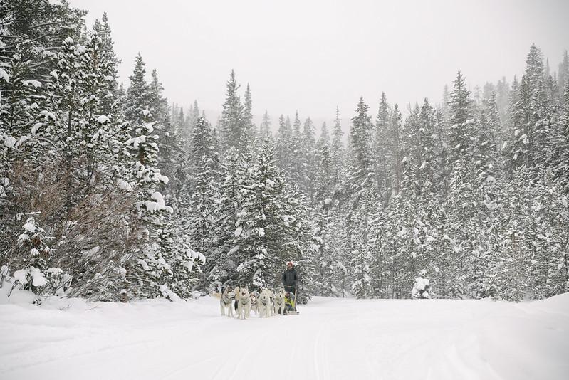 Dog Sledding Colorado