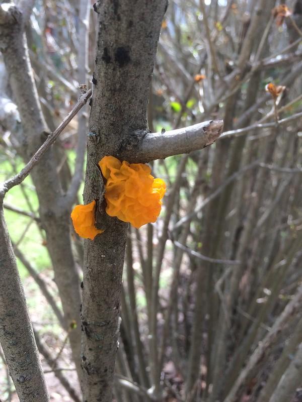 Orange Fungus?