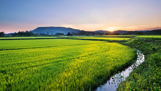 Rice fields sunset | by mateuspabst