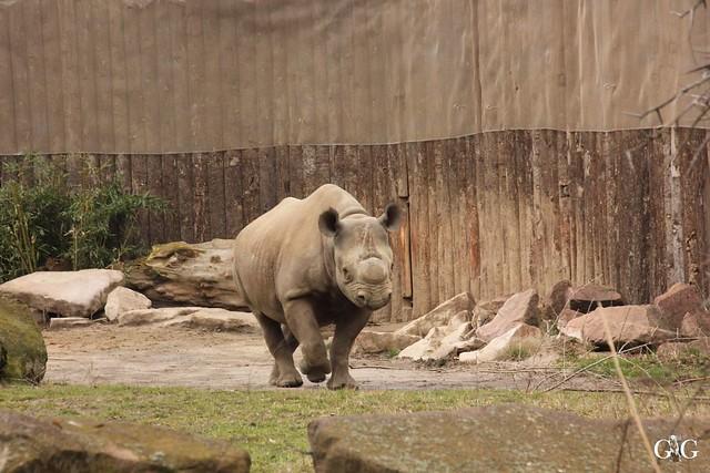 Ausflug Zoo Magdeburg 11.03.17 Teil 1.3