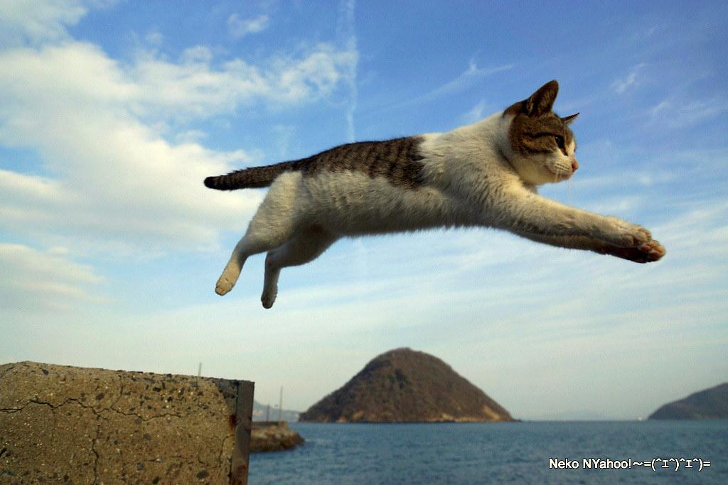 ... 島猫 猫ジャンプ冬 | by GINPA 銀波