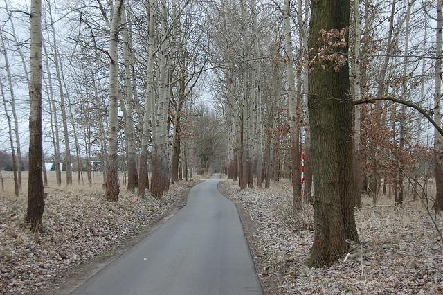Bild: Ein Weg schlängelt sich durch ein Wäldchen, wegen der frühen Jahreszeit sind die Bäume kahl. Auf dem Boden liegt Laub vom letzten Jahr.