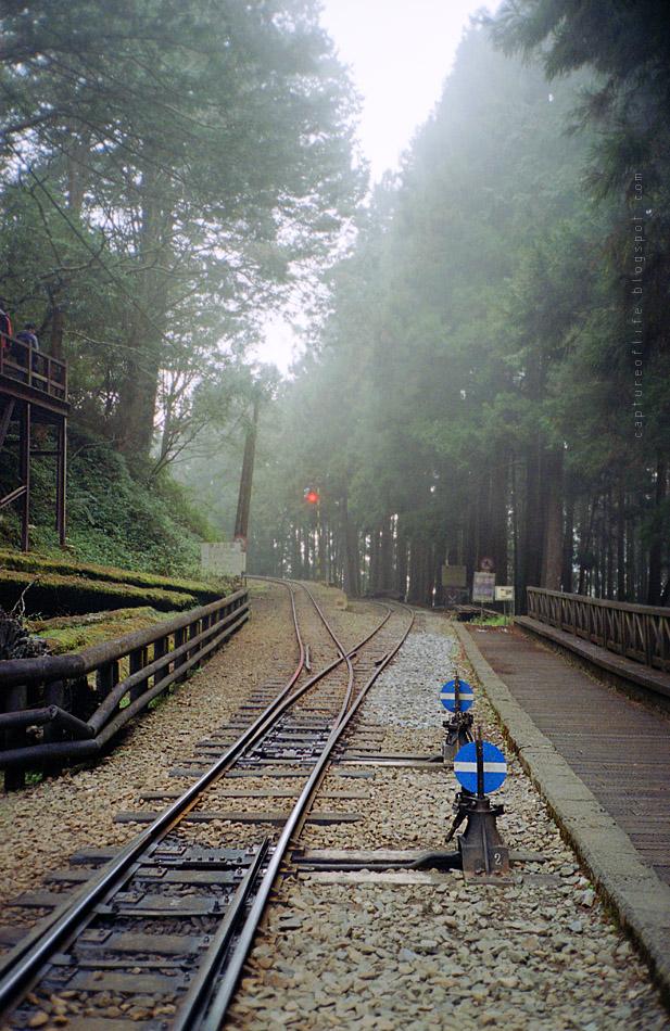 阿里山森林