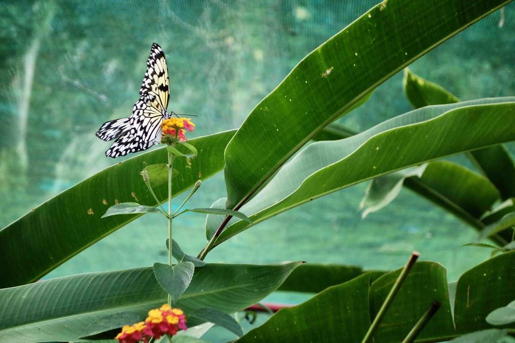 Siquijor - Butterfly Garden 3