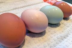 four eggs IMG_9829